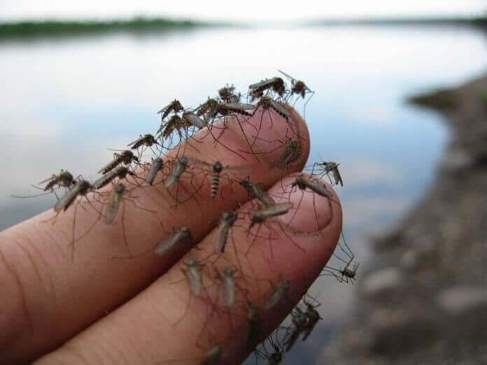 Отпугиватель комаров Pest-Reject купить в Абакане